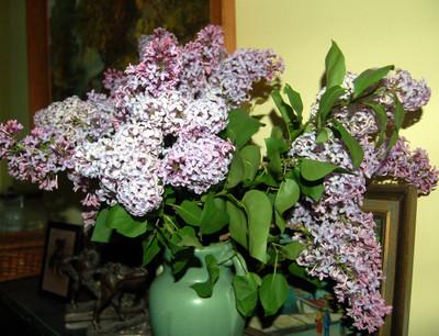 April_22_lilac