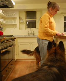 Me_dogs_kitchen_2