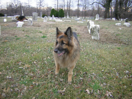 Jack_in_graveyard_at_druid_hill_park_feb